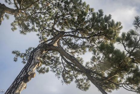 ForestPark17