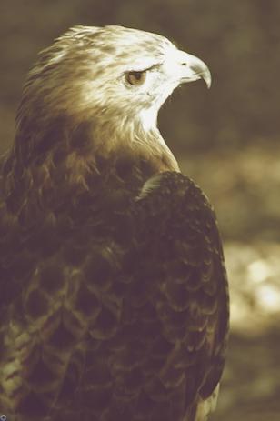 worldbirdsanctuary19